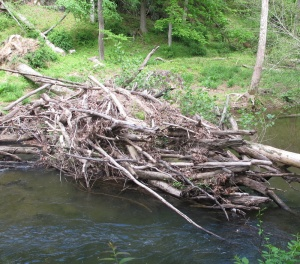 Beaver lodge Gunpowder Falls 150517