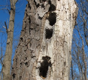Woodpecker Holes AT Blackburn 140222