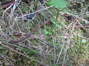 Earthworm Elizabeth Furnace 160721